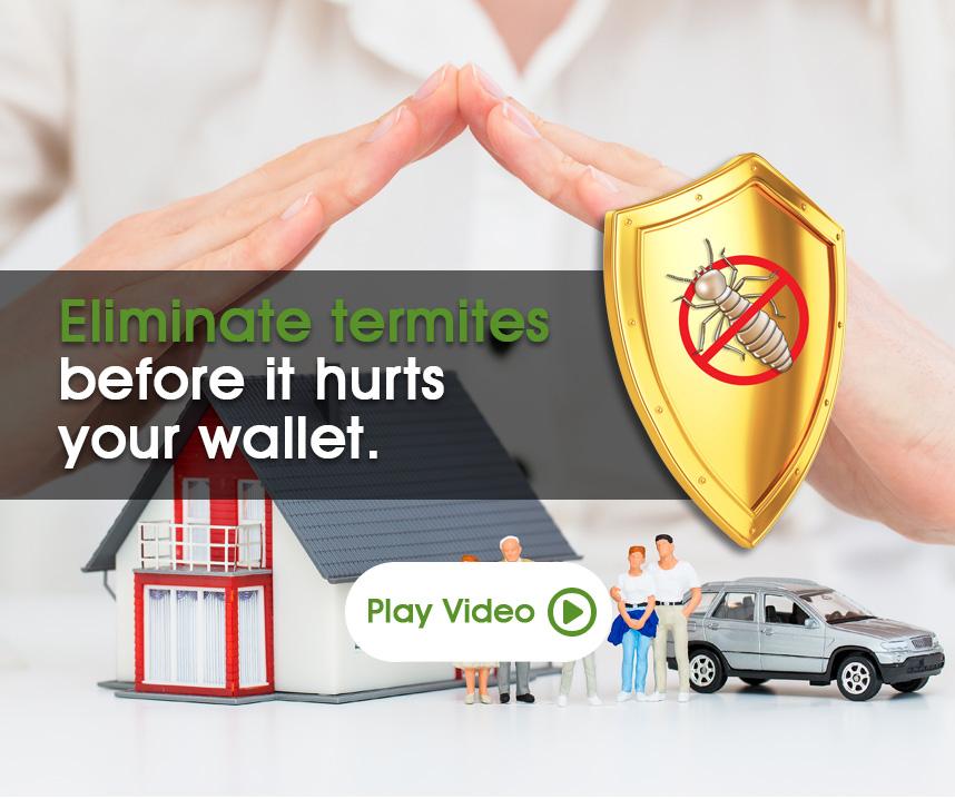 eliminate termites
